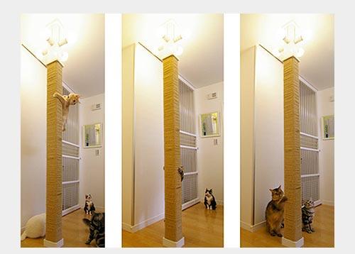Когтеточка для кошки в квартире