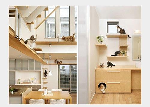 Фото дом для кошки внутри вашего дома
