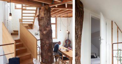 Квартира в эко стиле. Вокруг дерева